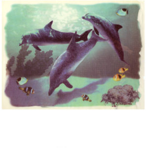 Edible Image ® by Lucks: Dolphins